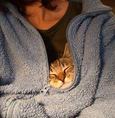 Tabby in a robe. #tabby #cat #robe