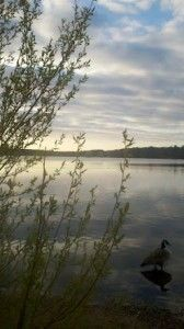 Morning at Horn Pond. #nature