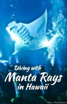 Diving with magnificent manta rays on the Big Island of Hawaii was an experience that quite literally brought tears to my eyes.  I couldn't believe our good fortune | Alex in Wanderland