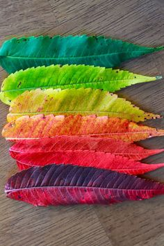 Cool leaves but also real. I see leaves colors similar to this. World Of Color, Color Of Life, True Colors, All The Colors, Color Combos, Color Schemes, Fuerza Natural, Arte Floral, Over The Rainbow