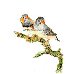 Zebra Finch, Print from Original Watercolor Painting, 5x7. Birds, art... ($11) ❤ liked on Polyvore featuring home, home decor and wall art