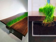 a table with a channel in the middle to grow fresh herbs, flowers, grass, whatever your heart desires. my heart desires this.