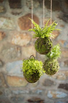 A Japanese string art garden is beautiful in indoor and outdoor spaces.