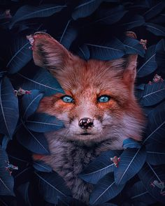 Superb Surreal Animal Artworks By Andreas Häggkvist - Animal photography Animals Images, Animal Pictures, Beautiful Creatures, Animals Beautiful, Fuchs Illustration, Wolf Hybrid, Animal Species, Endangered Species, Fox Art