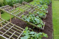 18 Fabulous Backyard Vegetable Garden Design Ideas for Beginners - New ideas Backyard Vegetable Gardens, Veg Garden, Vegetable Garden Design, Garden Trellis, Edible Garden, Garden Landscaping, Garden King, Garden Netting, Cottage Garden Design