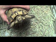 Greek Tortoise Unboxing!