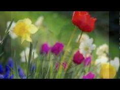 ΤΑ ΗΛΙΟΛΟΥΛΟΥΔΑ ΤΟΥ Γ3: Τραγούδια για τα λουλούδια, αφιερωμένο εξαιρετικά στα ηλιολούλουδα του Γ3, του 8ου της Πετρούπολης... Καλώς ήλθατε, αγαπητά μου στο μπλογκ μου!!!