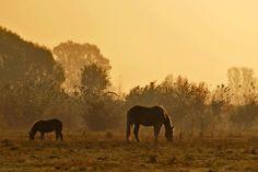 The photo was taken in Ónod, Hungary. Hungary, Elephant, Wings, Animals, Animales, Animaux, Animal, Animais