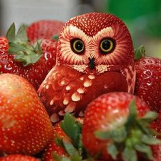 Amazing Fruit art.Believe it or not this cute owl is made of Strawberry's.