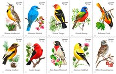 Song Bird Stamps are just one way to celebrate your love of birds. Get some ideas at the Wild Bird Journal.