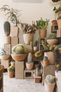 garden design - 100 Beautiful DIY Pots And Container Gardening Ideas LivingMarch com Les Succulents Cactus, Planting Succulents, Planting Flowers, Cactus Cactus, Cactus Decor, Succulent Planters, Hanging Planters, Succulent Display, Flowers Garden