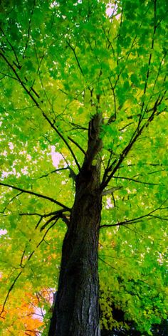Green • photo: bark on Flickr