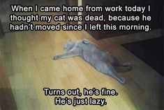 Funny Animal Picture Dump Of The Day 22 Pics #CatQuotes