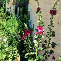 Plants, Gardens, Sustainable Tourism, Home, Plant, Planets