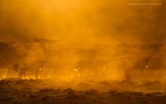 Kenya Gold - by Marsel van Oosten