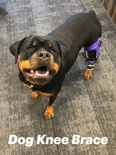 Free consultation: ask us if a dog ACL brace or other canine leg brace will help your pet. Acl Brace, Knee Brace, Live Happy, Happy Life, Pittsburgh, Dog Braces, Appointments, Closer, Your Pet