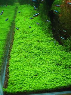 Goldfish Relaxation On Pinterest Aquarium Decorations