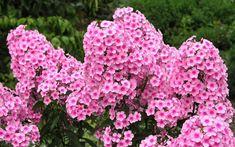 Gut FüR Energie Und Die Milz Blumenstrauß Rosa l