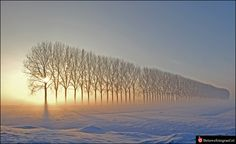 a line of trees in Holland's Winter