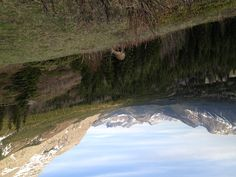 Deer cresting the ridge , Canadian Rockies, near Banff & Canmore, Alberta  #travelalberta