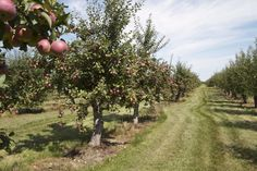 Pick your own Orchards, Fruit, Fruit Tree Garden