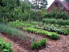 Weedless Gardening: This undated photo shows beds in a weedless vegetable garden in New Paltz, New York. (AP Photo/Lee Reich)
