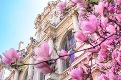 Le printemps à Lyon en photo #printemps #lyon #photo #photographie #fleurs #flowers #love #colors Floral Clock, Lyon France, Lifestyle Blog, Blogging, Joy, Deco, Spring, Nature, Plants