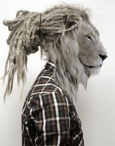 Hipster Lion - Caps d'animals en persones (2)