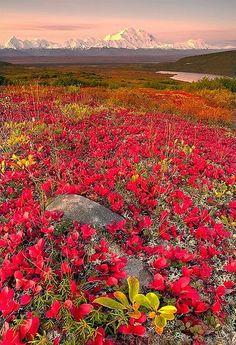 Fall Season In Alaska