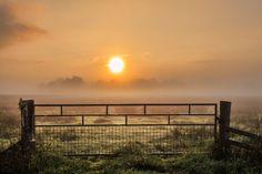 In the morning.......... Hek tijdens zonsopkomst in de mist