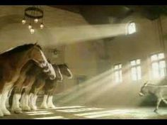 aaaawwwww.....Budweiser Commercial - Clydesdales Donkey.  I love these horses and the Bud commercials with them!!