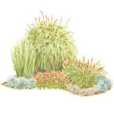 Enjoy the Beauty of Grasses Ornamental grasses are great because they look beautiful all winter and are ultraeasy to grow. Soften hard-to-mow corners in the front of your home with this small-space garden plan. Garden size: 10 by 8 feet. Download this plan!