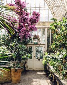 glass and steel greenhouse with pink blooms and green plants. / sfgirlbybay
