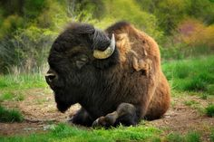 Dogwood Canyon, Branson Vacation, American Bison, Hobby Farms, Trout Fishing, Horseback Riding, Oklahoma, Great Places, Missouri