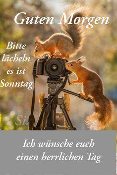 Pin Von Marion Auf Das Leben Lustige Guten Morgen Bilder