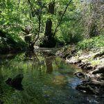 Belgrad Ormanı Resimleri