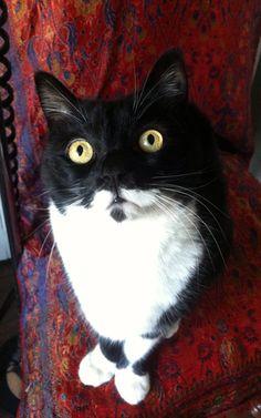 my cat.. Otto <3