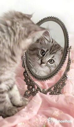 Cats are so cute, they can't help but look at themselves in the mirror. | The Secret Life of Pets | In Theaters July 8