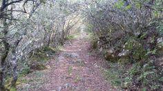 Paisaje ruta del estrecho de Covas Country Roads, Paths, Scenery, Fotografia