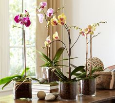 Ways to Display Orchids - Bing images