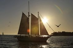 Boats under sails, Go Nautical, Old Tall Ship, Adventure at Sea, Sunset Sailing, Wooden Ships, Columbia, Gorch Fock, US Coast Guard Barque Eagle