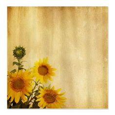 Aged Paper Texture With Sunflowers Shower Curtain Rachael Layne Sunflower Bathroom How To Age