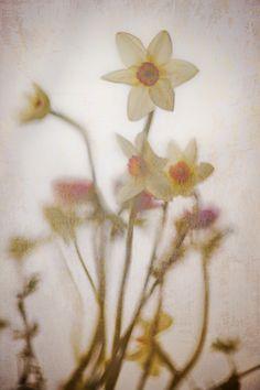 #maplantemonbonheur Art Floral, Pressed Leaves, Flower Art, Images, Plants, Girly Girl, Naturaleza, Landscape, Flowers