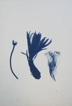 Lurdes Castro -  O grande herbário de Sombras