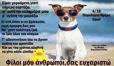 Mirrored Sunglasses, Mens Sunglasses, Animals, Animales, Animaux, Men's Sunglasses, Animal, Animais