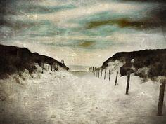 Dutch landscape / Dunes / Wassenaar