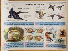 This is a classic French school poster with a botanical design, showing spring planting on one side, with a wonderful series of illustrations about birds. Vintage Birds, French Vintage, French Industrial Decor, Birds And Their Nests, Bird Poster, French School, School Posters, Antique Clocks, Vintage Posters