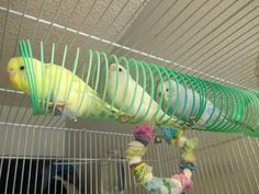 slinky budgies. In my estimation, this is a brilliant idea.