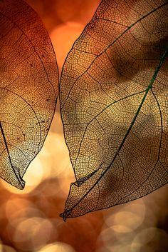 ~~Unscheinbar | leaf macro | by Andrea Witt~~