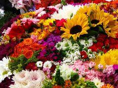 Asociación Colombiana de Exportadores de Flores (Asocolflores ...